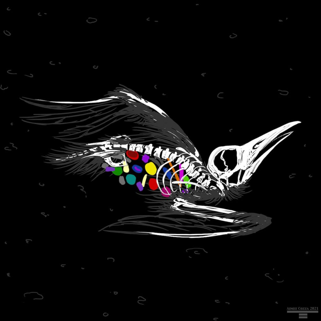 A skeleton and some leftover feathers of a seagull, filled with colorful plastics